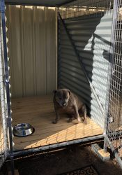 Narrabri's Best Pet Friendly Accommodation - Narrabri Big